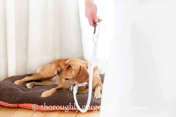Bride-and-her-dog-at-her-wedding-in-Sotogrande-Spain