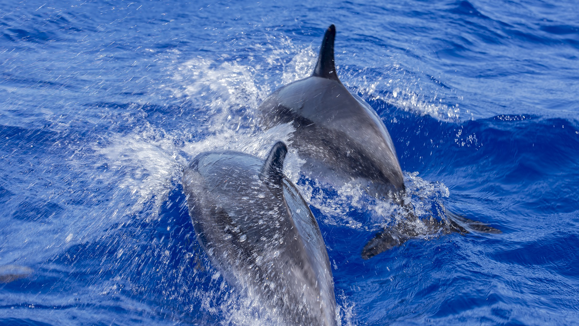Dolphin watching, Nautical tourism Spain. Estepona.